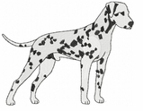 dal019 Dalmatian (small or large design)