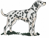 dal023 Dalmatian (small or large design)