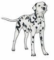 dal025 Dalmatian (small or large design)
