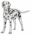 dal028 Dalmatian (small or large design)