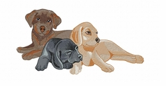 lab138 Labrador Retriever (small or large design)