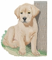 lab038 Labrador Retriever (small or large design)