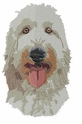 labra010 Labradoodle (small or large design)