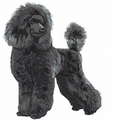 pood084 Poodle (small or large design)