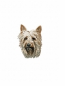 silky001 Silky Terrier (small or large design)