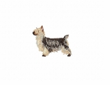 silky002 Silky Terrier (small or large design)