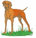 v008 Vizsla (small or large design)