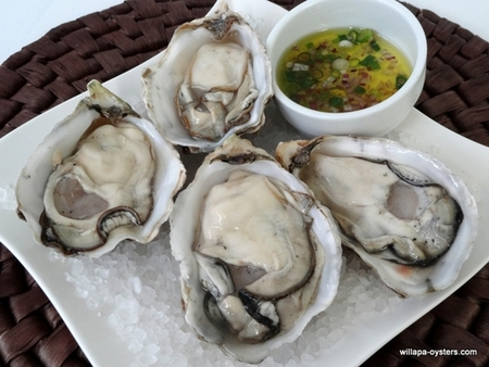 Large Oysters - 50 Count - <br>Free Shipping - FedEx Standard Overnight