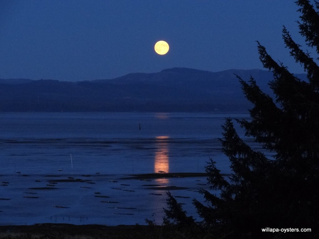 oysterville moonrise