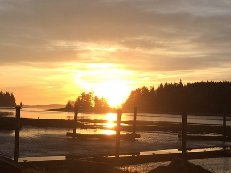 willapa bay sunset