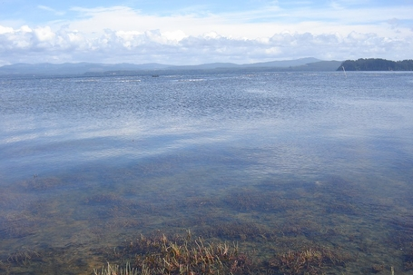 willapa bay clear water 2