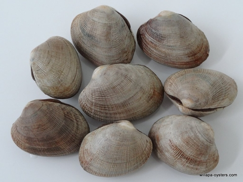 Willapa Cherrystone Clams