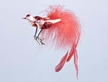 Crimson Duet Bird Ornament by Inge Glas