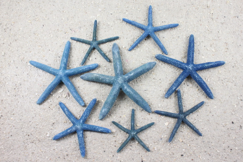 blue starfish when you need something blue for your