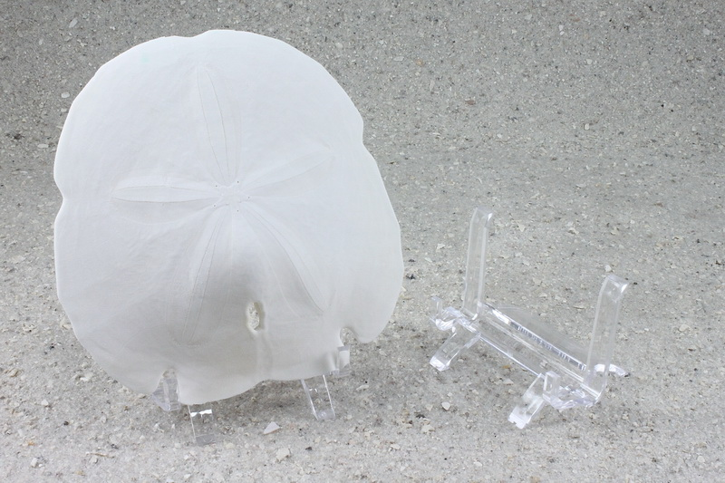 large lucite sand dollar display stand