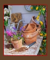 EARTHY SCENT HOME FRAGRANCE OIL