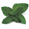 Peppermint Essential Oil  .5 oz Bottle