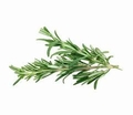 Rosemary Essential Oil  .5 oz