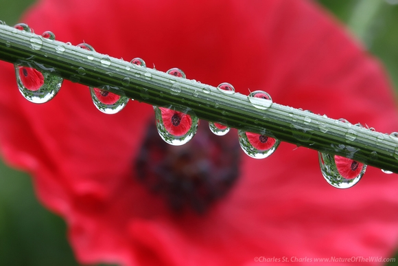 Drops of Light: rain/dew drops class