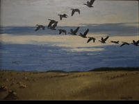 BISHOP:  V FORMATION - CANADA GEESE