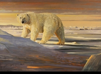 "HACKING: POLAR BEAR</a> <img src=""http://edit.store.yahoo.com/I/yhst-53343112752519_1792_1103024"">"