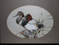 LAMAY: CANVASBACK PAIR