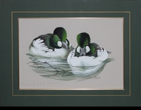 "LAMAY: TWO AMERICAN GOLDENEYE DRAKES</a> <img src=""http://edit.store.yahoo.com/I/yhst-53343112752519_1792_1103024"">"