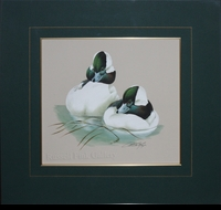 "LAMAY: TWO BUFFLEHEAD DRAKES</a> <img src=""http://edit.store.yahoo.com/I/yhst-53343112752519_1792_1103024"">"