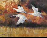 "ST. CLAIR: SNOW GEESE</a> <img src=""http://edit.store.yahoo.com/I/yhst-53343112752519_1792_1103024"">"