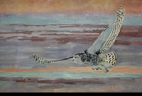 "ST. CLAIR: SNOWY OWL</a> <img src=""http://edit.store.yahoo.com/I/yhst-53343112752519_1792_1103024"">"