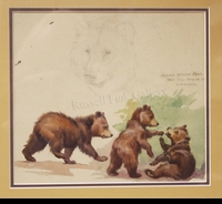WEBER:  BROWN BEAR CUBS