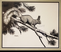 WEBER:  KAIBAB SQUIRREL