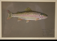 WEBER:  RAINBOW TROUT</a><br><b>- SOLD</b>