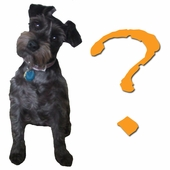 Deciding On The Right Harness For Your Dog
