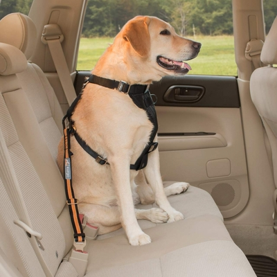Direct To Seatbelt Safety Tether