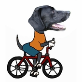Dog Biking Tips