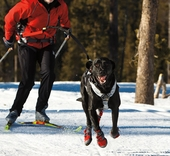 Dog Skijoring & Canicross