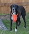 EzyDog Padded Chest Harness