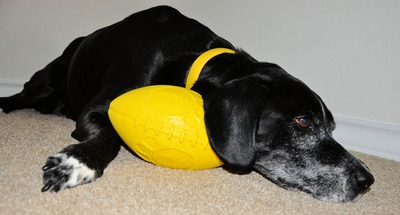 Jolly Football Dog Toy