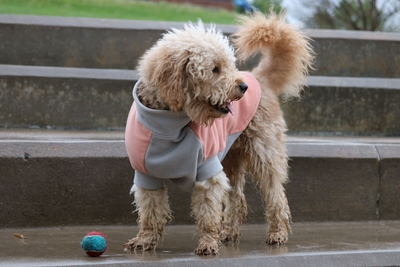 Highline Fleece Dog Wrap Coat