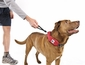 Rad Dog Release N Run Leash Collar Combo