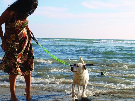 Long Dog Leash For Beach The Best Beaches In World