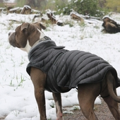 Top 10 Dog Winter Coats For 2017/2018