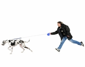 What is the benefit of biking my dog vs walking them?