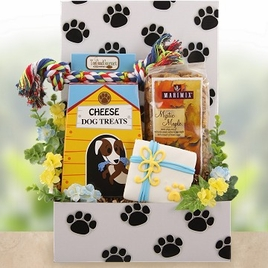 Playtime Dog and Owner Care Package - SOLD OUT