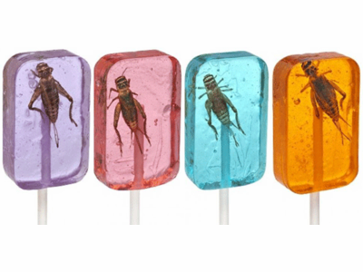 Suckers with Real Cricket Inside! (4 Flavor Options)