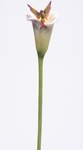 Calla Lily Stem Flitty