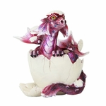 Pink Dragon Hatchling