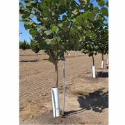 "12"" x 16"" TREE GUARDS, Bundle of 50"