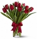 Valentine Red Tulips